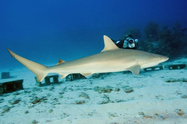 12 Facts About Hammerhead Sharks  Mental Floss
